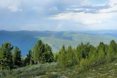 Pittoresk alpin cederträtaiga Arkivfoto