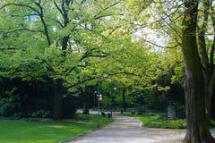 Pittoresk aveny med träd i parkera royaltyfri fotografi