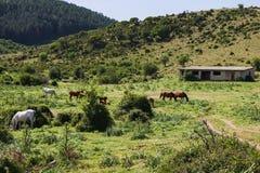 Pittoresk bygd med hästar i Sardinia royaltyfri foto