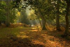 pittoresk clearingskog Royaltyfri Fotografi