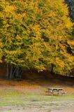 Pittoresk park i höst Fotografering för Bildbyråer