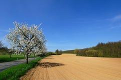 pittoresk plogad sikt för fält Arkivfoto