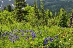 Pittoresk sikt av att blomma alpina äng- och bergglaciärer royaltyfria bilder