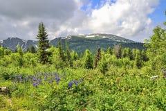 Pittoresk sikt av att blomma alpina äng- och bergglaciärer royaltyfri fotografi