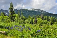 Pittoresk sikt av att blomma alpina ?ng- och bergglaci?rer royaltyfri bild