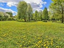 Pittoresk sikt av att blomma alpina ?ng- och bergglaci?rer fotografering för bildbyråer