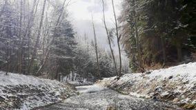 Pittoresk sikt av den snabba fl?dande floden med aktuellt skapande skum f?r hastighet, i att f?rbluffa vinterskogen med tr?d stock video