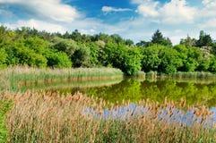 Pittoresk sjö, sommarskog på bankerna och himmel Royaltyfria Foton
