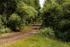 Pittoresk skogväg arkivbilder
