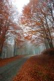 Pittoresk skogväg Arkivfoton