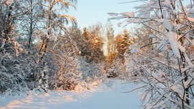 Pittoresk vintrig plats Arkivbilder