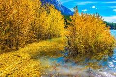 Pittoreska Abraham Lake i en flod Royaltyfri Foto