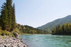 Pittoreska banker av den Katun floden i Altai Arkivfoto