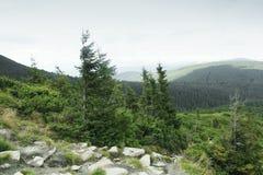 Pittoreska berg, t?t skog och h?rlig himmel Natur royaltyfri foto