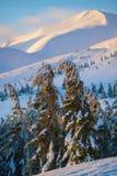 Pittoreska granar som buktas under vikten av snö och is Arkivbilder