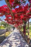 Pittoreska ställen på Capri Royaltyfri Foto