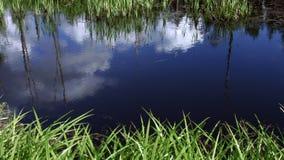 Pittoreskt damm med busksnåret av starrgräset och Acoruscalamus danska ?lakes landscape litet tidvattens- wild wadden f?r naturha lager videofilmer