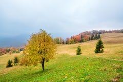 Pittoreskt höstlandskap i bergen med ängen och färgrika träd på förgrund och dimma ovanför dalen II Royaltyfri Foto