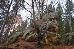 Pittoreskt landskap av berg Fotografering för Bildbyråer