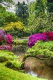 Pittoreskt landskap av japanträdgården i Haag & x28; Den Haag & x29; i Nederländerna Arkivbild