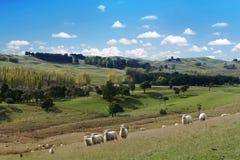 Pittoreskt landskap för sommar med flocken av får arkivfoto