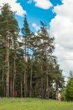 Pittoreskt landskap i barrskogen av den soliga dagen för sommar Royaltyfri Fotografi