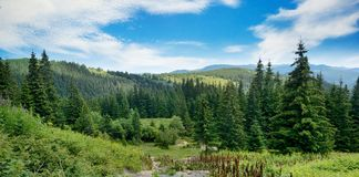 Pittoreskt landskap i Carpathians arkivbild