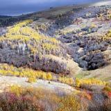 Pittoreskt landskap med träd i sen höst Arkivfoto
