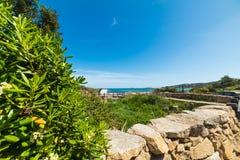 Pittosporum-Hecke durch das Meer lizenzfreies stockfoto