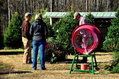 Pittsboro, NC: Couple Buying Christmas Tree Stock Photo