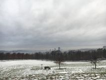 Pittsburgh linia horyzontu obrazy royalty free