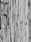 Pittura bianca consumata con molti fori sulla struttura di verticale della parete Immagine Stock Libera da Diritti