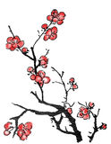 Pittura cinese del fiore della prugna Fotografie Stock Libere da Diritti