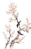 Pittura cinese tradizionale del fiore della prugna Fotografia Stock Libera da Diritti