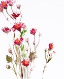 Pittura dei fiori Fotografie Stock Libere da Diritti