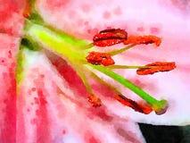 Pittura del narciso sulla carta Fotografia Stock