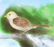 Pittura del passero Fotografia Stock