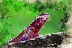 Pittura dell'acquerello dell'agama a testa piana della roccia di Mwanza fotografia stock libera da diritti