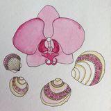 Pittura dell'acquerello del fiore dell'orchidea e delle conchiglie Immagini Stock