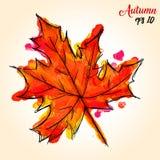 Pittura dell'acquerello dell'acero Palmate Autumn Leaf Immagine Stock