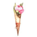 Pittura dell'acquerello della fioritura rosa delle peonie Fotografia Stock