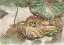 Pittura dell'acquerello delle foglie del loto e della tartaruga Fotografia Stock