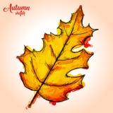 Pittura dell'acquerello di Autumn Leaf Pinnately lobato Fotografie Stock Libere da Diritti
