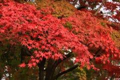 Pittura di autunno della natura Fotografia Stock