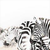 Pittura digitale del gregge della zebra illustrazione vettoriale