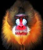 pittura digitale della scimmia Immagini Stock Libere da Diritti