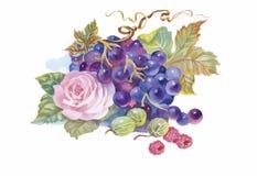 Pittura disegnata a mano dell'acquerello dell'uva e del fiore Immagini Stock