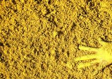 Pittura gialla fotografie stock