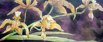 Pittura gialla del fiore dell'orchidea nel colore di acqua Fotografie Stock Libere da Diritti
