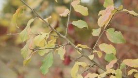 Pittura giallo arancione calda nel primo piano della foresta di autunno delle foglie dell'albero archivi video